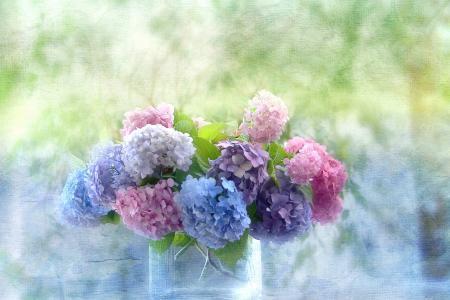 美丽的花朵绣球花在花瓶里