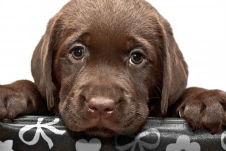 小悲伤的棕色猎犬小狗