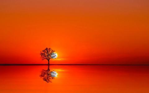 树在日落之间水和天空之间