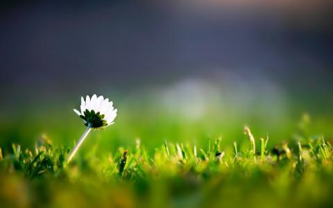 草和一朵孤独的花