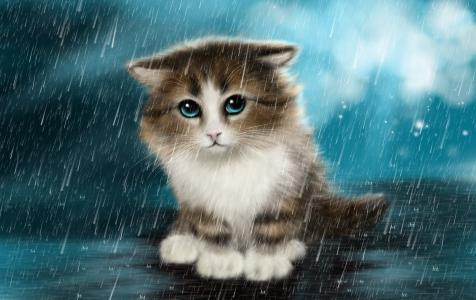 在雨中画一只小伤心的小猫