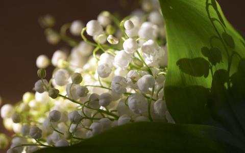 3月8日的铃兰花束