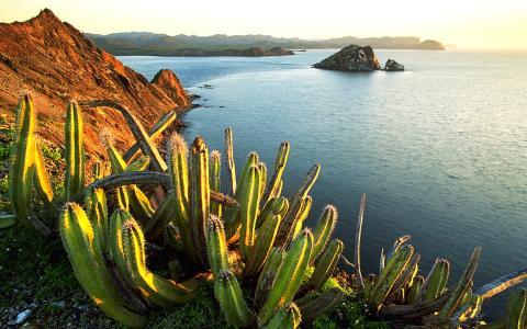 仙人掌在墨西哥的海滩上