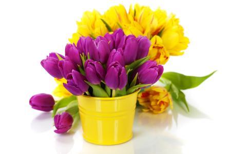 丁香和黄色郁金香在白色背景上的花瓶里