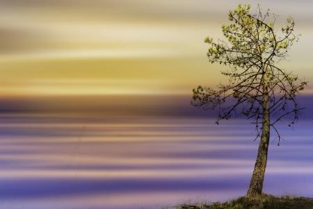 树木,颜色