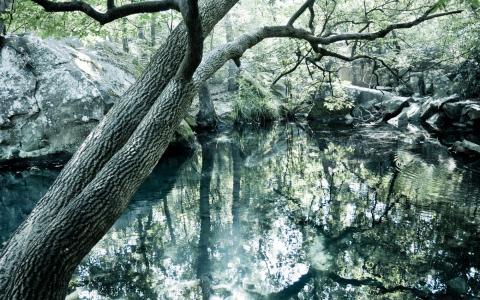 清澈的湖水在森林里