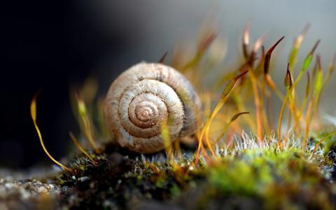 蜗牛在草地上
