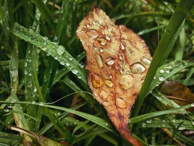 在绿草在雨滴中的黄色秋天的树叶