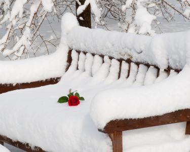 玫瑰在长凳上
