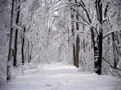 白雪公路在冬天