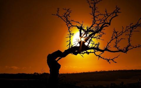 在日落时非常弯曲的树
