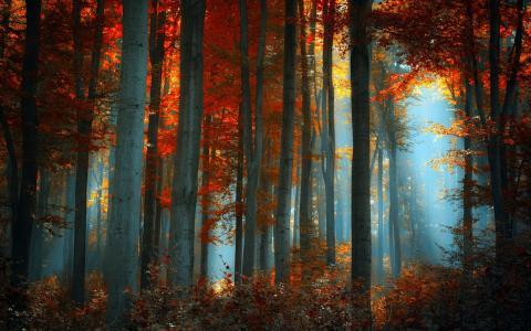 雾在秋天的树林