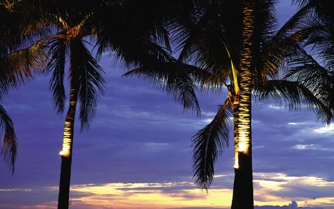 棕榈树在夕阳下