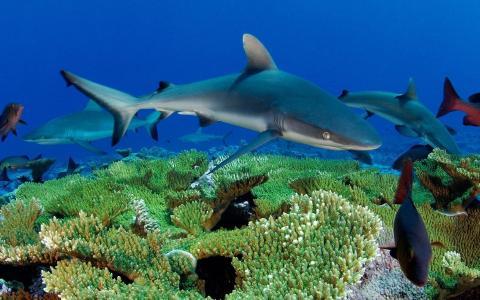 在珊瑚礁上的小鲨鱼