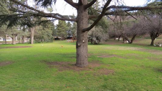 一棵老树在花园里