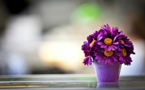 紫罗兰花在一个锅里