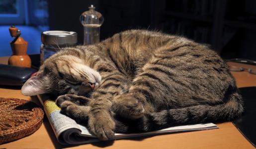 睡在一张桌子上的灰色猫在日志上