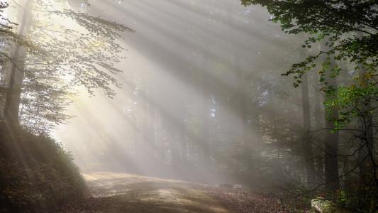 那一缕照进森林里的阳光