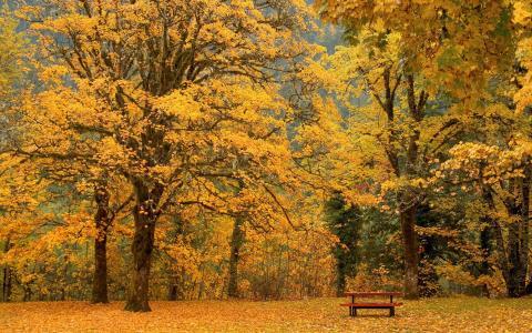 在黄色树下的长凳