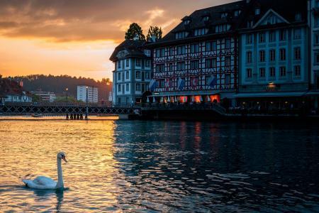 瑞士湖上的天鹅