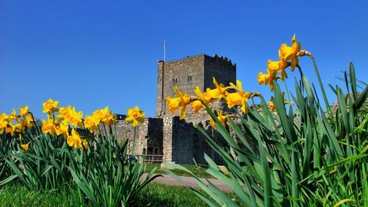在堡垒附近的黄色花