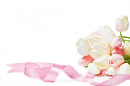 郁金香与粉红丝带白色背景,贺卡模板上的花束