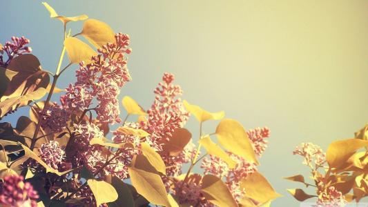 夏天的花朵
