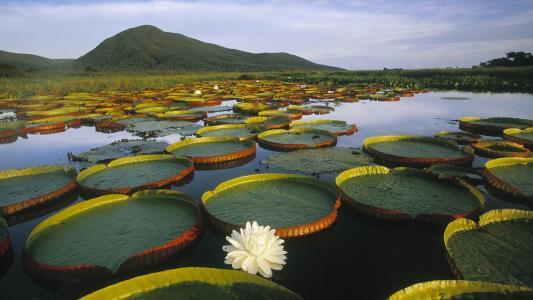 植物漂浮在湖水中