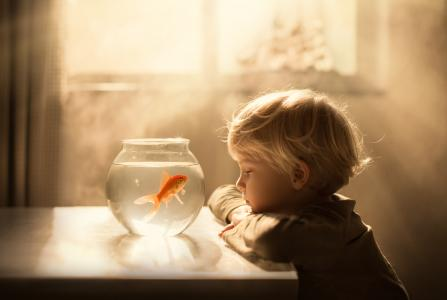 小男孩看着水族馆与金色的鱼