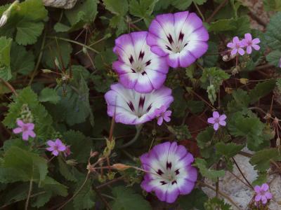 在花圃的丁香花