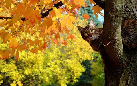 猫坐在一棵树上