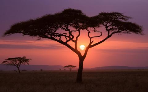 在日落时稀疏的草原植被的大草原