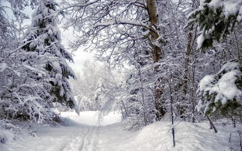 在茂密的森林冬季道路