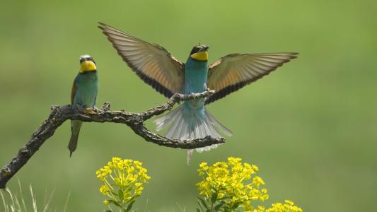 欧洲的鸟类