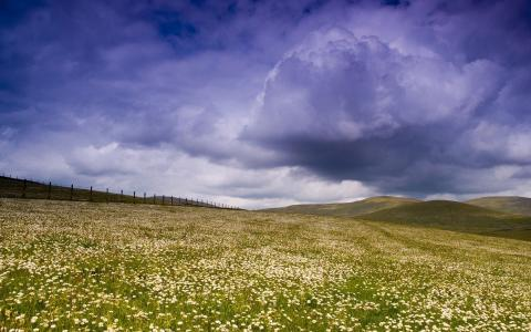 春黄菊的领域上空的云彩
