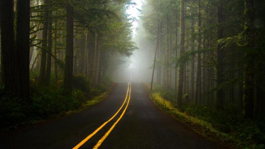 雾在森林里