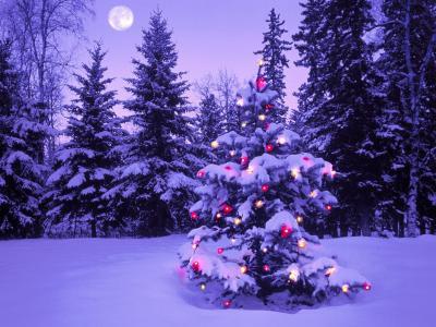 圣诞树在满月的新年