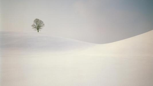 在积雪覆盖的山上棵孤独的树