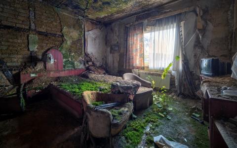 复古,房间,电视,苔藓,床