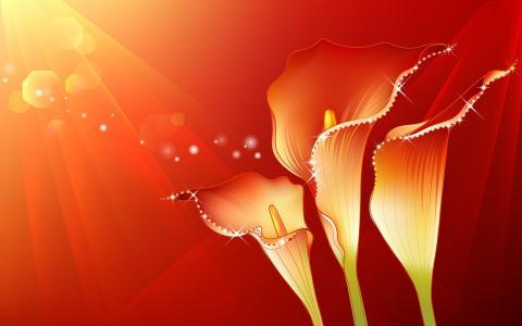 鲜花和光线