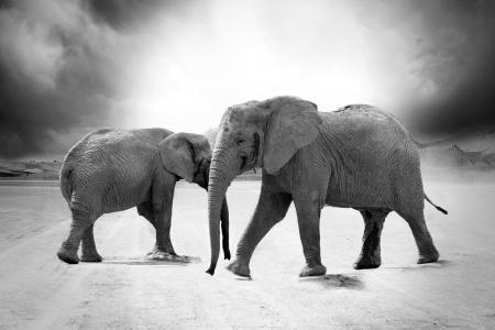 大象路黑白照片