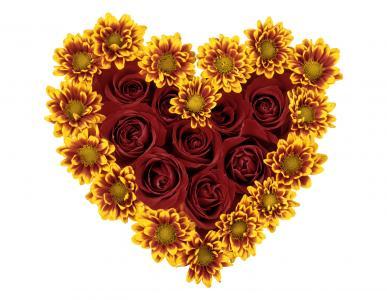 玫瑰和菊花的心在白色背景开花