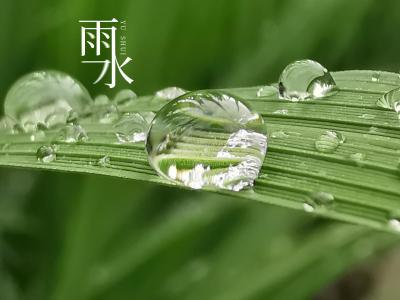 雨水节气清新配图