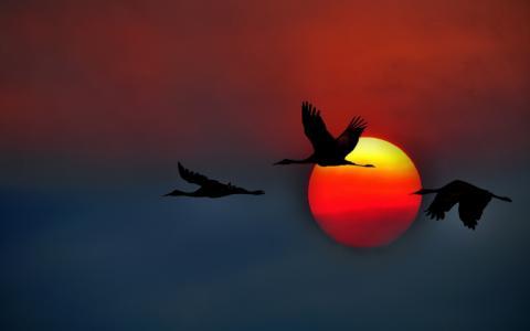 三个天鹅在红太阳的背景上