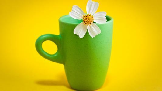 在杯子里的花
