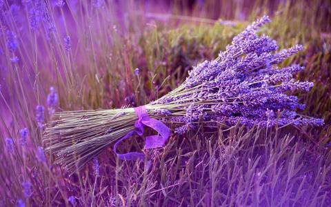 薰衣草薰衣草花束用丝带绑的花束