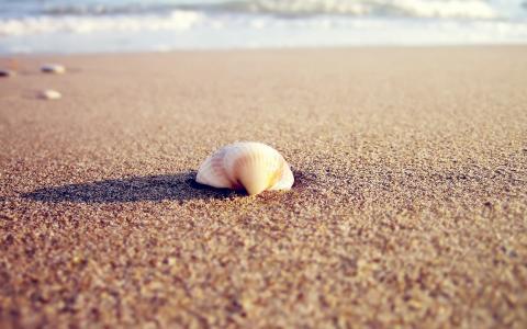 贝壳在沙滩上