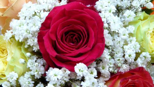 大红玫瑰与白花levka