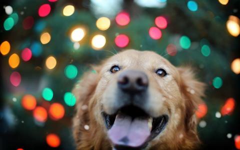 在灯的背景中的猎犬