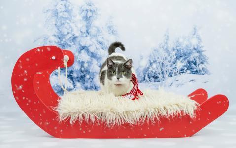 在喜庆的红色雪橇在冬天的猫